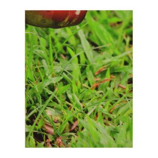 GREEN FROG HIDING IN GRASS QUEENSLAND AUSTRALIA WOOD WALL DECOR