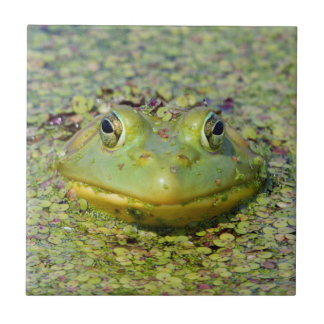 Green frog in duckweed, Canada Ceramic Tile