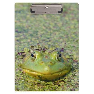 Green frog in duckweed, Canada Clipboard