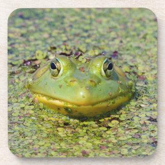 Green frog in duckweed, Canada Coaster