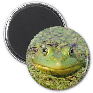 Green frog in duckweed, Canada Magnet