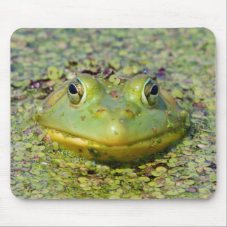 Green frog in duckweed, Canada Mouse Pad