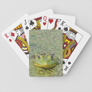 Green frog in duckweed, Canada Playing Cards