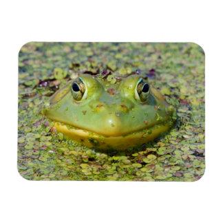 Green frog in duckweed, Canada Rectangular Photo Magnet