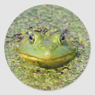 Green frog in duckweed, Canada Round Sticker