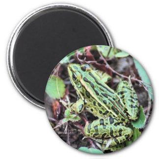 Green Frog Fridge Magnets