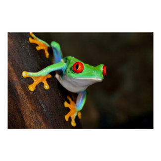 Green Frog Nature Poster