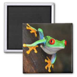 Green Frog Nature Wildlife Square Magnet