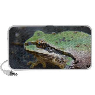 Green Frog on Tree Stump PC Speakers
