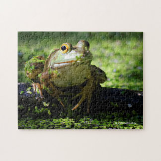 Green Frog Strikes a Pose on the Hose Puzzle