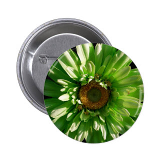Green Gerber Daisy Button