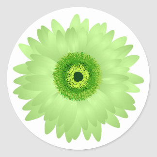 Green Gerbera Daisy Classic Round Sticker