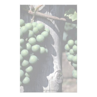 Green grape clusters stationery design