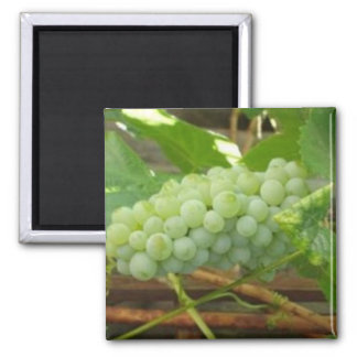 Green Grapes of California Square Magnet