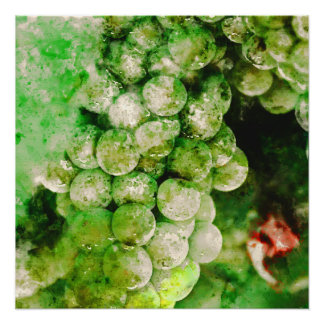 Green Grapes Used to Make Wine