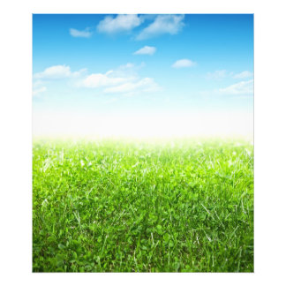 Green Grass And Blue Sky With Clouds Photo Art
