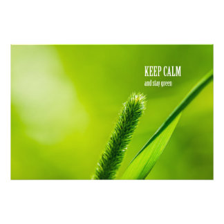 Green Grass And Sun - Keep calm and stay green Photo