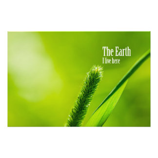 Green Grass And Sun - The Earth: I live here Photographic Print