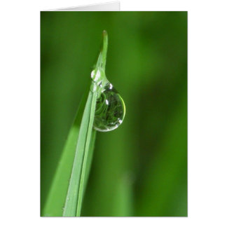 Green grass and water droplet with reflection card