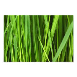 Green Grass background Photo Art
