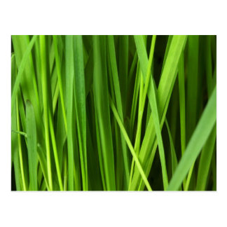 Green Grass background Post Card