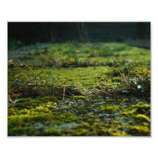 Green grass photograph