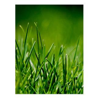Green grass post cards