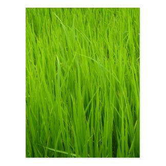 Green grass postcards