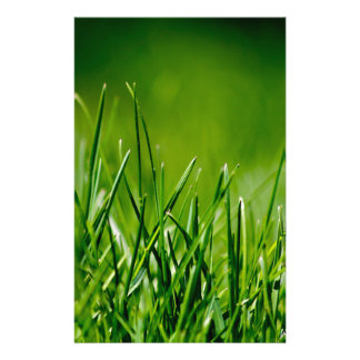 Green grass personalized stationery
