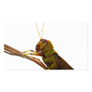 Green Grasshopper close up details Business Cards
