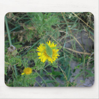 Green grasshopper on a yellow flower. mouse pad