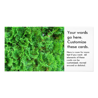 Green growing evergreen shrub colorful art photo photo card template