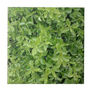 Green Hedge Shrub Type Plant Photograph Photo Tile