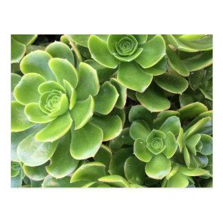 Green herb postcard