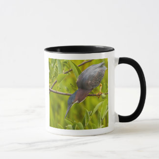 Green heron hunting from a branch mug