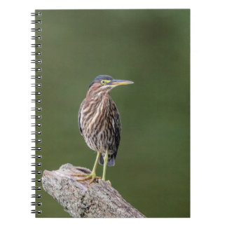 Green Heron on a log Notebooks