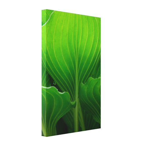 Green Hosta Leaves Wrapped Canvas Print