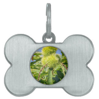 Green husks and leaves of sweet chestnut tree pet name tag