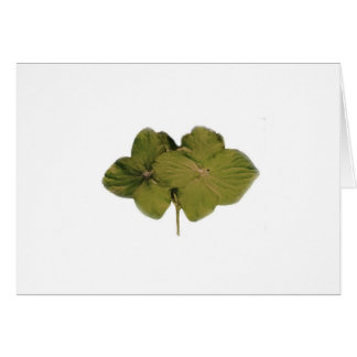 Green Hydrangea note card