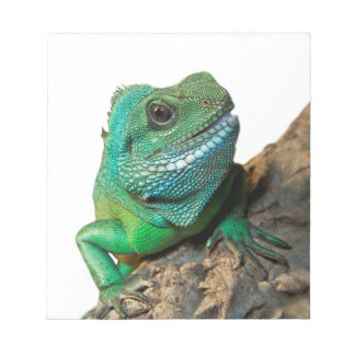 Green iguana notepad