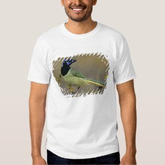 Green Jay, Cyanocorax yncas, adult on blooming Tshirt
