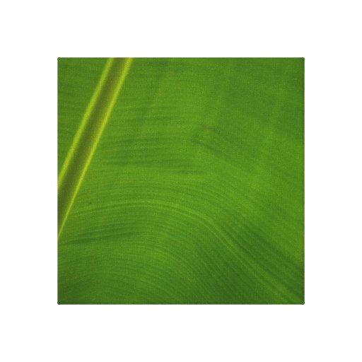Green Leaf Gallery Wrap Canvas