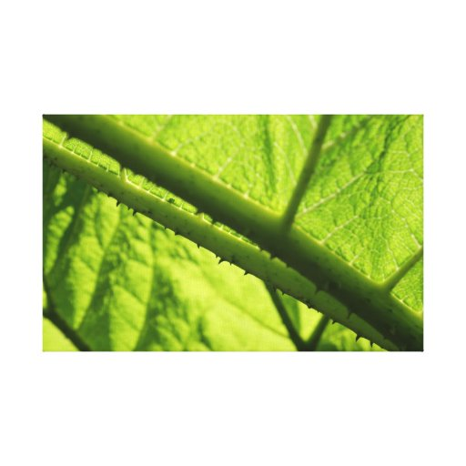 Green Leaf, focused on spiny center. Stretched Canvas Print