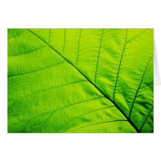 Green Leaf Greeting cards