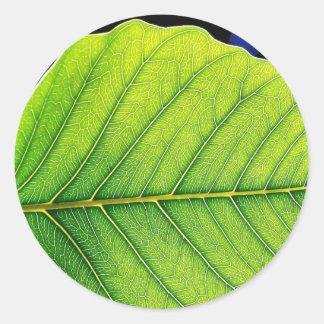 Green Leaf Leaves Round Sticker