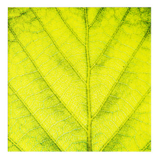 Green Leaf Macro Acrylic Wall Art