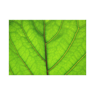 Green Leaf Macro Stretched Canvas Prints