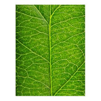 green leaf postcard