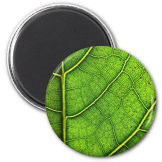 Green Leaf Round Magnet