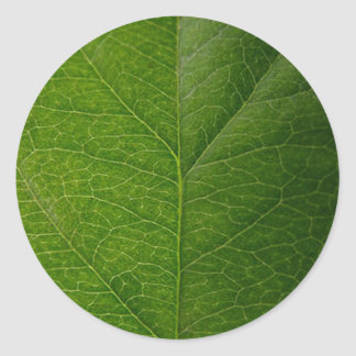 Green Leaf Round Sticker